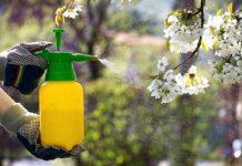 Какие бывают вредители плодовых деревьев