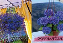 7 синих как небо цветов для кашпо